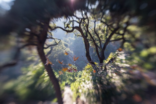 Final Lensbaby image, by CDTobie